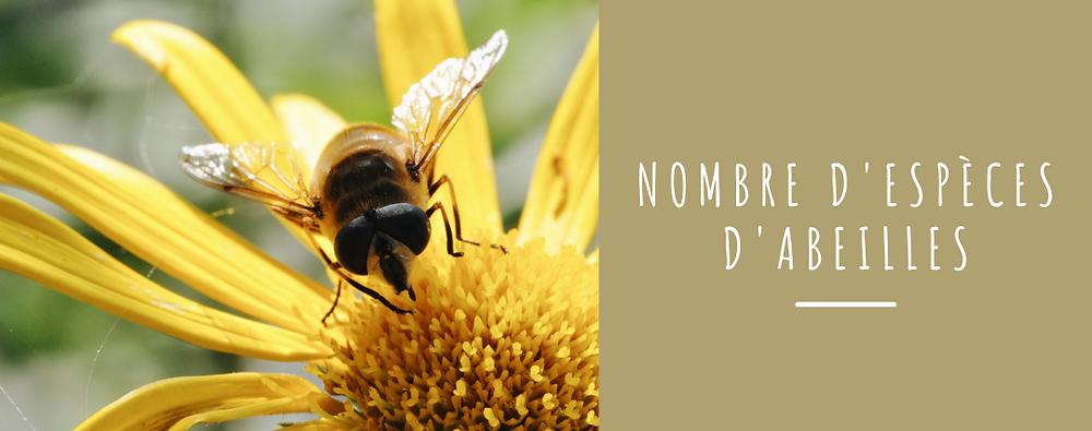 espèces d'abeille