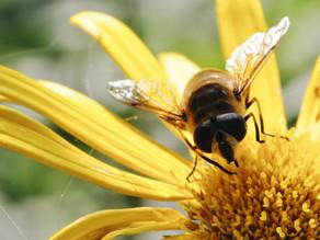 Nombre d'espèces d'abeille