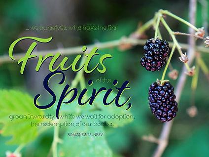 berries_20682ac.jpg