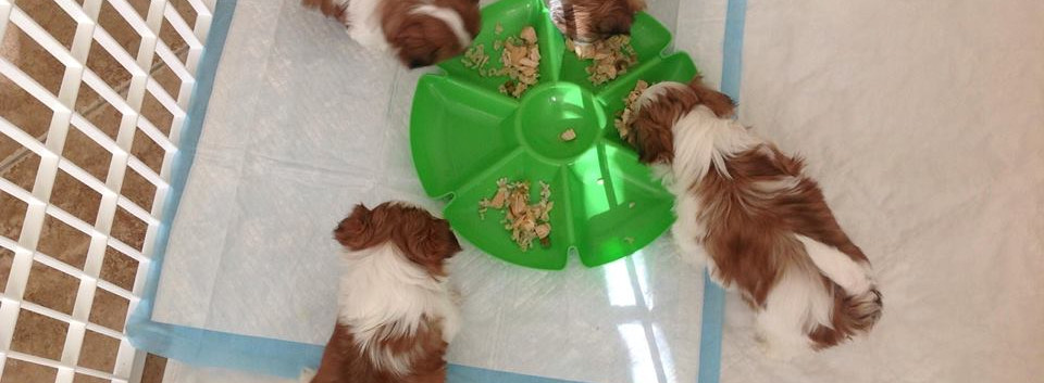 Bailey's%20first%20litter.jpg