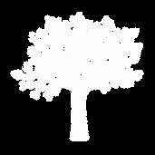PNG_Árvore_essencis_02.png