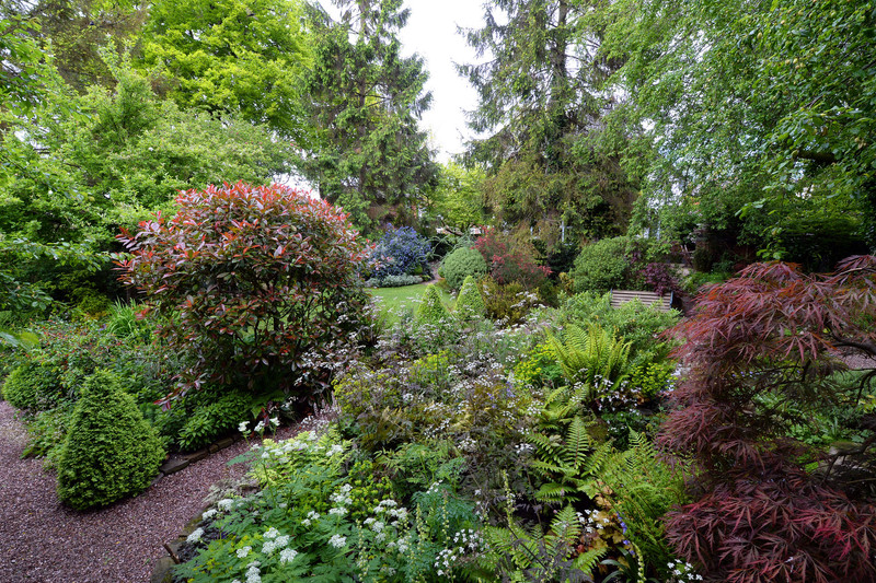 Lush evergreen planting for shade