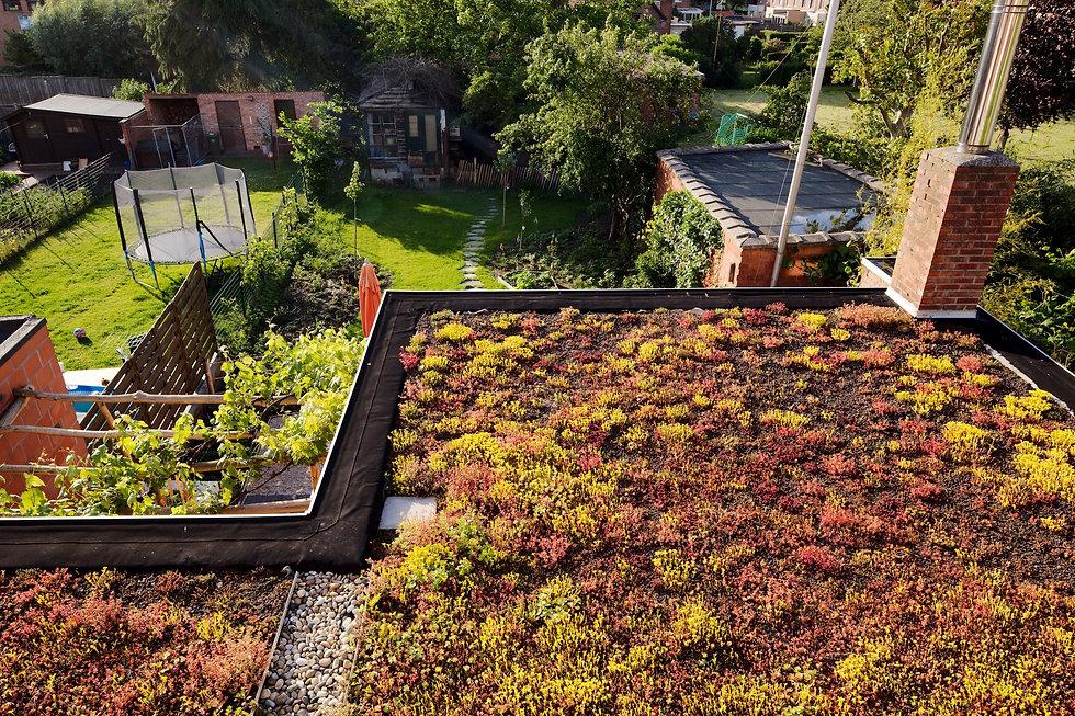 Groen dak voor een gezondere stad