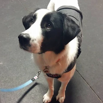 Luna (adopted)