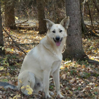 Chance (adopted)
