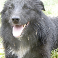 Fynn (adopted)