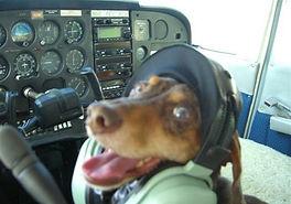 Dog Flying.jpg