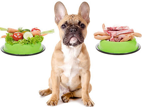 Food for French Bulldog Puppies