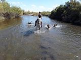 3 dogs river.jpg