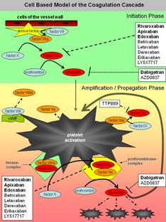 Nuovi anticoagulanti efficaci e sicuri nel tromboembolismo venoso
