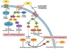 Switch tra antipiastrinici inibitori del recettore ADP, è sicuro?