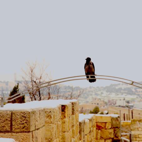 Jeruzalem in het wit