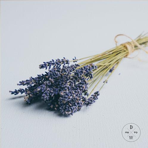 Lavender - Preserved