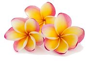 plumerias with transparent background.pn