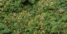 Alpine Meadow Blend-48oz-EX884