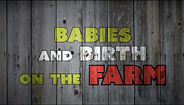 Babies And Birth On The Farm