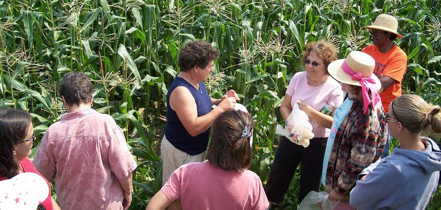 sex in corn field.jpg