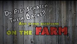 Do Pigs Scratch Their Backs?