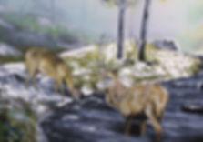 Deer at dawn jpeg.jpg