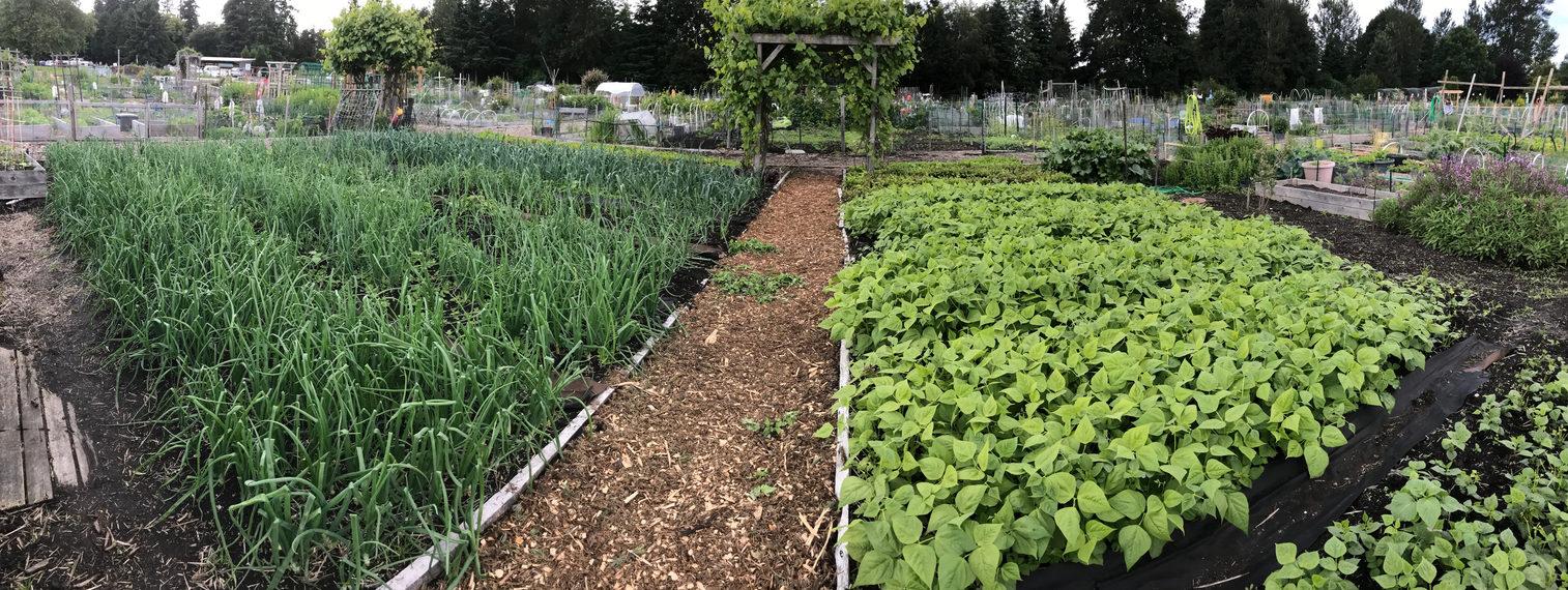 Food bank gardens