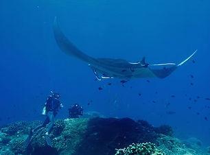 Activities_diving_2_500_333_mini.jpg