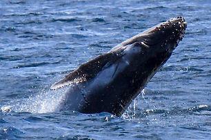 Activities_whalewatching_1_500_333_mini.