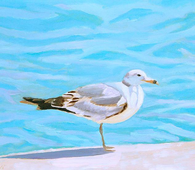 Bermuda Gull