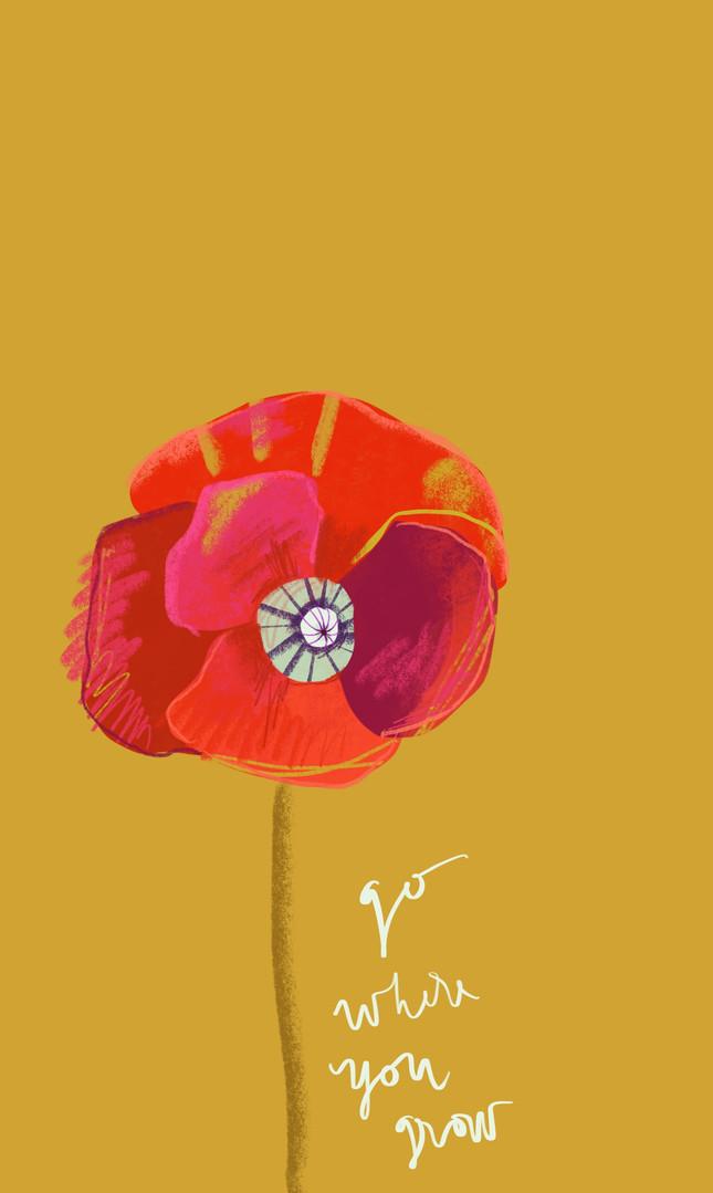 Poppy_1.jpg