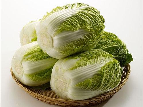 개당 배추 / Singular Fresh Napa Cabbage