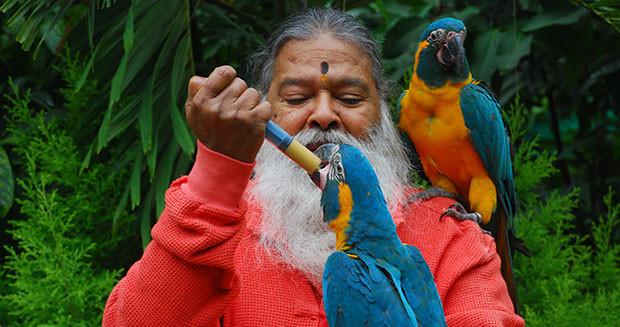 dr-swamiji-feeding-a-parrot.jpg