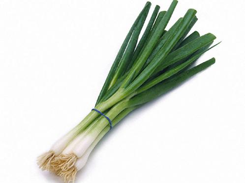 파 한묶음 | Fresh Springgreen Onion