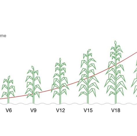 PG18: Evaluating Nitrogen Levels at V10