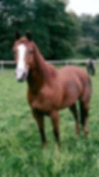 Horses in field.jpg