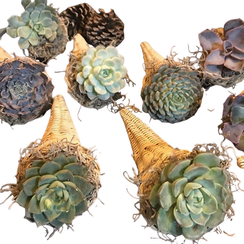 Mini Succulent Cornucopia