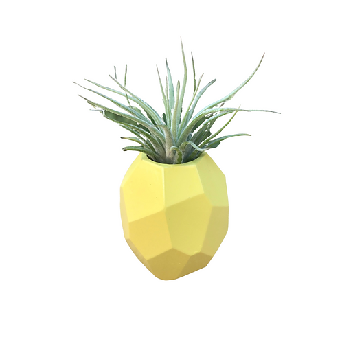 Pineapple Air Plant Holder w/Live Tillandsia