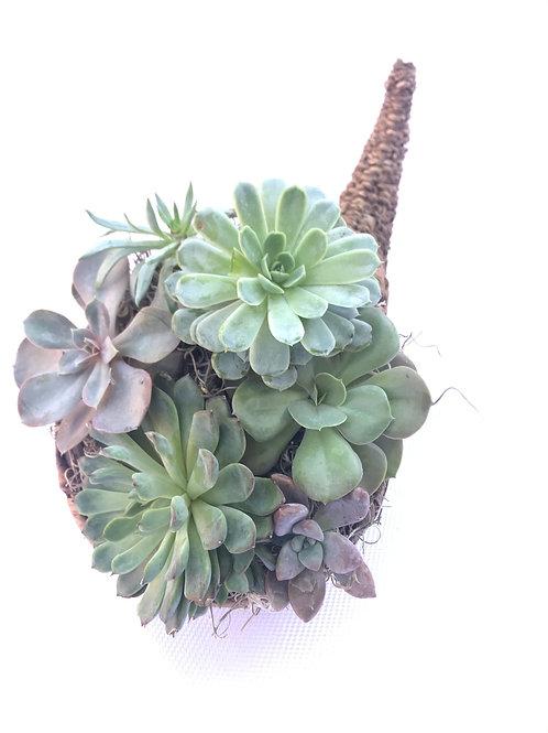 Succulent Cornucopia 1.0