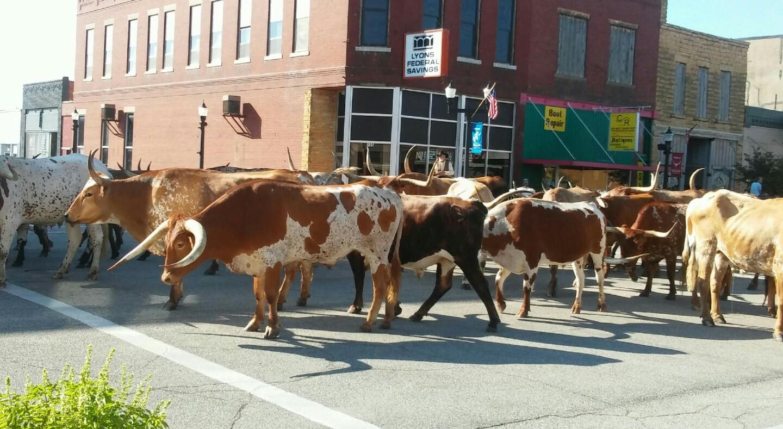 Longhorns in Ellsworth