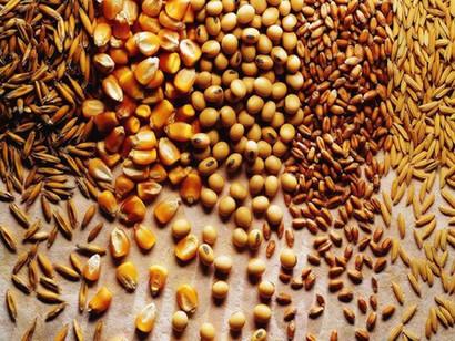 Onze fatos que você precisa saber sobre os grãos e as sementes.