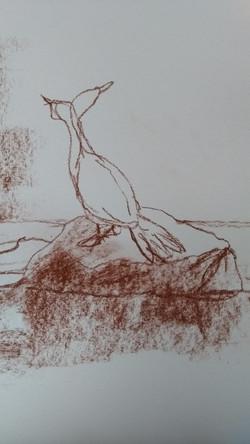 schets aalscholver