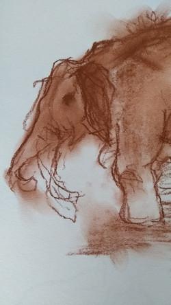 schets olifant 4