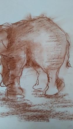 schets olifant 7