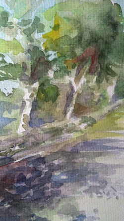 Bomen in het zonlicht