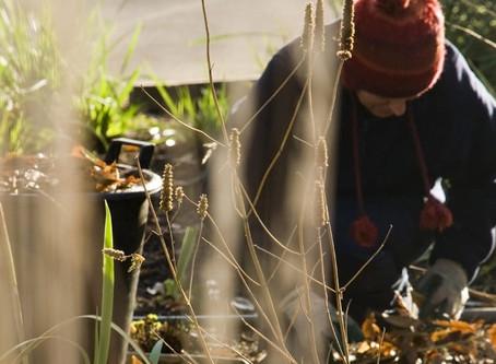 Preparing your garden for winter... October Edition