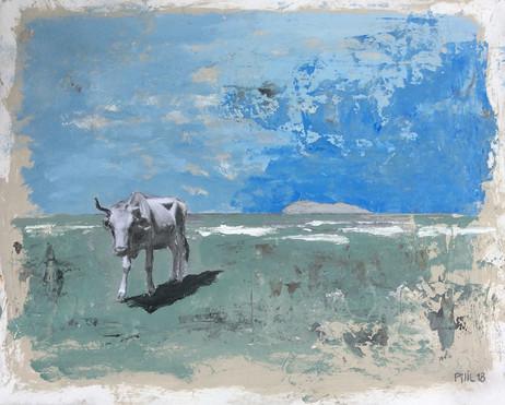 Vache Cap Corse