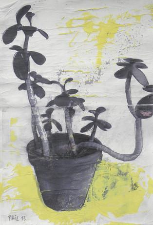 Plante dans pot