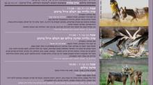 פסטיבל חורף של ציפורים במוזאון הפתוח לצילום, גן התעשיה תל חי