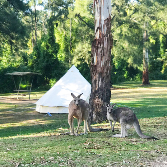 The local roos love the later afternoons