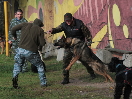 Курс защитно-караульной службы. Рассказываем, что это и для чего нужно🦮