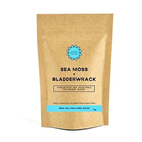 Sea Moss and Bladderwrack