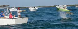 Boat with Tarpon